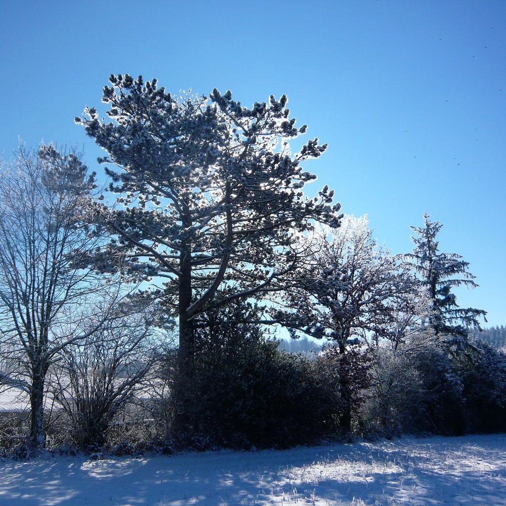 Extérieurs en hiver Gîte de la Presqu